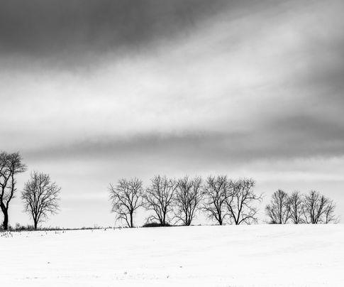Trees on a snow covered field in rural Adams County, Pennsylvania